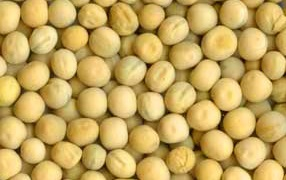 Yellow peas Ukraine